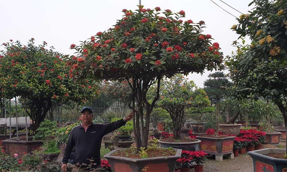 Chuyển cây cảnh có nhiều cành, gai, hoa